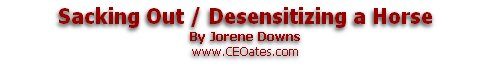 Sacking Out / Desensitizing a Horse